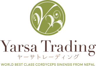 Yarsa Trading ヤーサトレーディング WORLD BEST CLASS CORDYCEPS SINENSIS FROM NEPAL