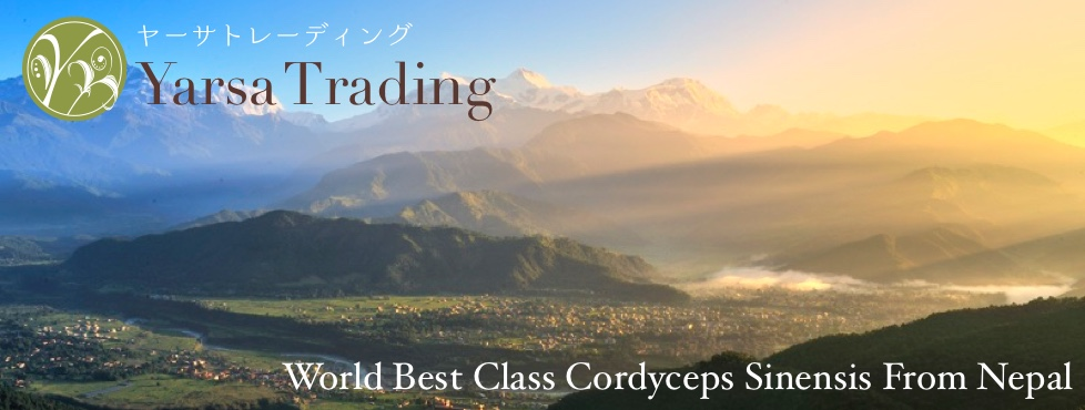ヤーサトレーディング Yarsa Trading World Best Class Cordyceps Sinensis From Nepal