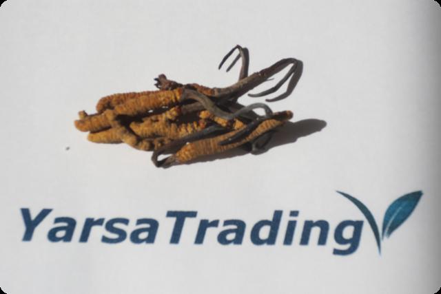 Yarsa Trading の冬虫夏草